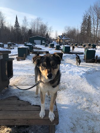 Muddy Paw Sled Dog Kennel Day Tours Jefferson 2020 All You Need To Know Before You Go With Photos Jefferson Nh Tripadvisor