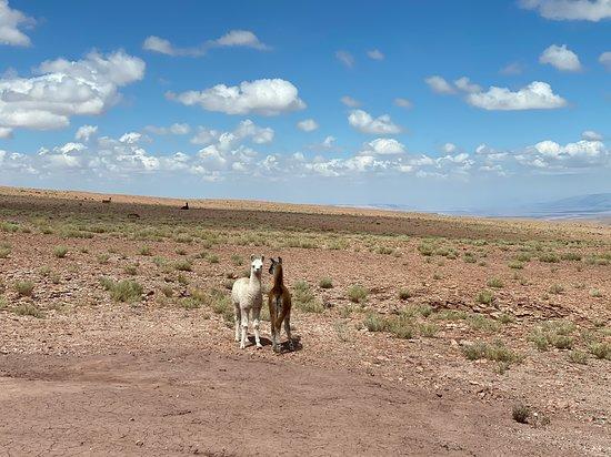 Atacama Extrema