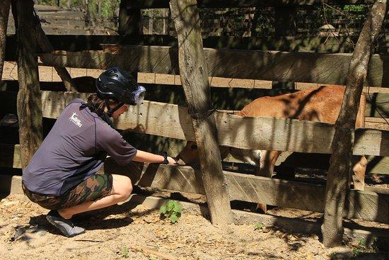 All Terrain Safari from Puerto Vallarta: Stop to feed the animals.