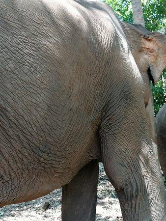 No hagáis el tour de los elefantes. Please don't do the elephant tour