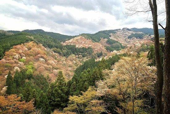 Yoshino, fjell og historie