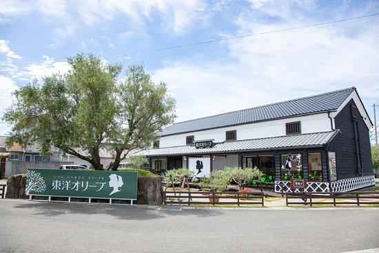 小豆島町, 香川県, オリーブの栽培から製造、販売まで一貫体制。こだわりのオリーブオイルからお土産にぴったりのお手ごろサイズまで、豊富なラインナップでお待ちしております。テイスティング、試食もできます。毎月第一土曜日開催のクリアオリーブオイル量り売りも好評です。女の子のシルエット「トレアちゃん」が目印です。SNSにて随時情報発信中! ・池田港より徒歩で約6分 ・土庄港よりオリーブバスで約20分 ・坂手港よりオリーブバスで約30分 (バス停:「東洋オリーブショップ前」下車) 駐車場有り(直営店正面)