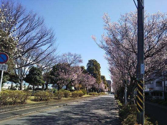 Higashihara Sakura Park