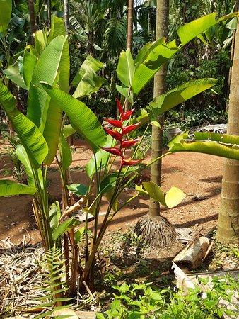 Sahakari Spice Farm (Ponda) - 2020 What to Know Before You ...