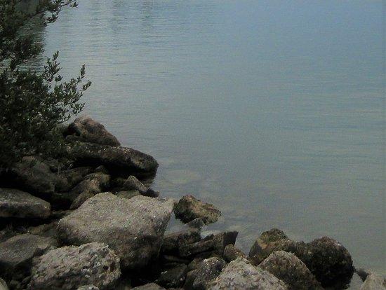 Terra Ceia, FL: Ragged Shoreline