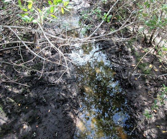 Terra Ceia, FL: Wetlands