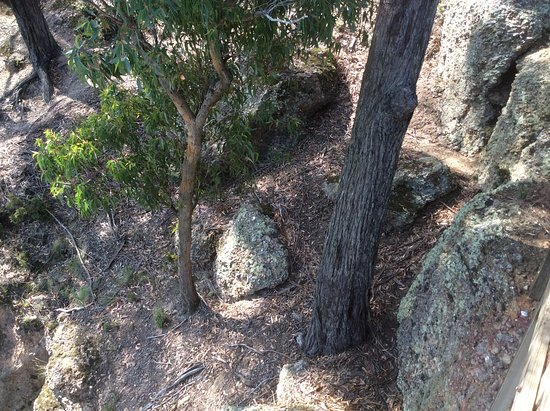 Tyers, Austrálie: Trees just growing out of the rocks