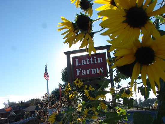 Fallon, NV: Lattin Farms