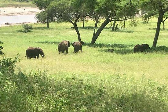 Dazzling Tanzania Adventures
