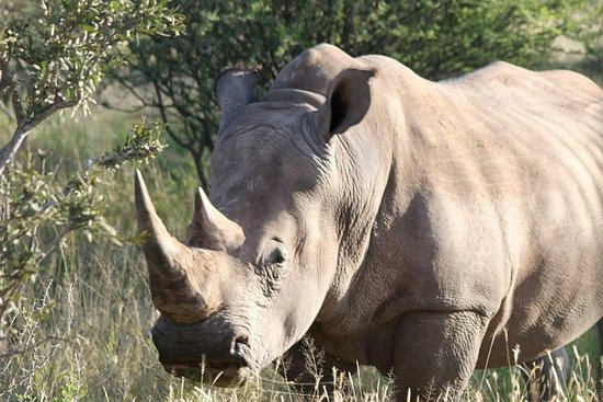 Tour privato Big 5 Aquila Safari e 5