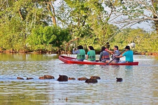 Trinidad, Колумбия: Observe fauna silvestre realizando un buen safari  llanero en canoa muy cerca a Yopal Casanare. Ideal para el avistamiento de aves, de fauna y animales típicos de la región llanera. Especial para escapar de la ciudad y conocer más de nuestra naturaleza colombiana.