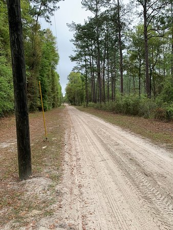 Additional Photos of Suwannee River State Park