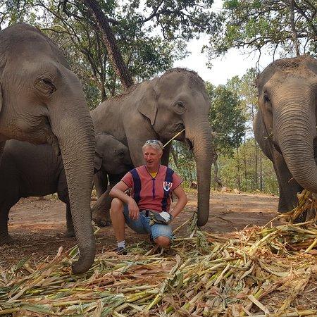 Elephant Freedom Village