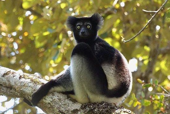 15-dagers tur til Sør- og Øst-Madagaskar med overnatting