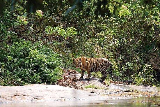 Parambikulam Tiger Reserve from Coimbatore