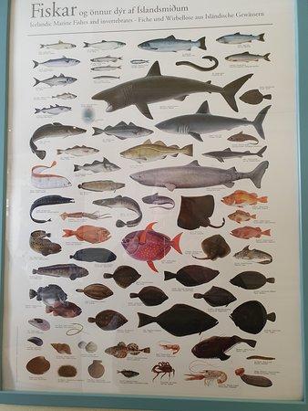 פטרקספיורדור, איסלנד: poster con i diversi tipi di pesce