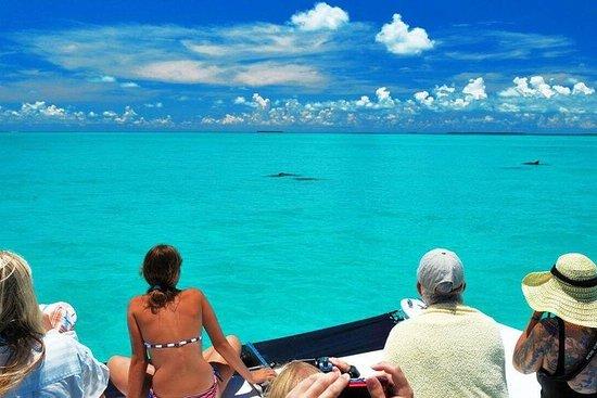 Gita di un giorno a Key West