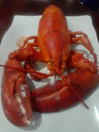 Madison Heights, MI: Larry the Lobster up close and personal