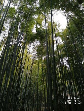 まっすぐ伸びる竹