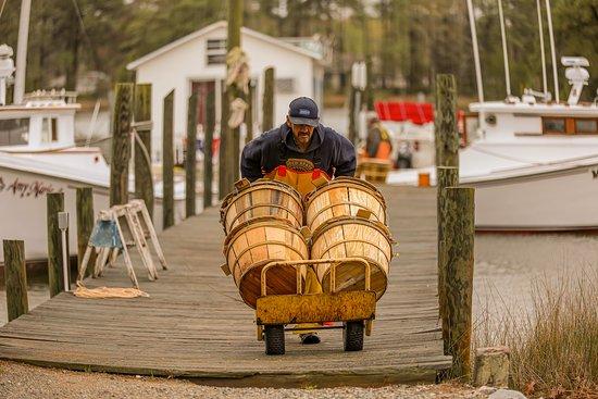 Port Haywood, VA: Hudgins Horn Harbor Marina  Fresh seafood available