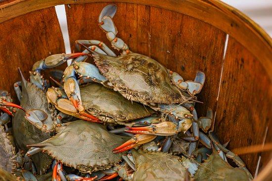 Port Haywood, VA: Hudgins Horn Harbor Marina  Fresh seafood daily
