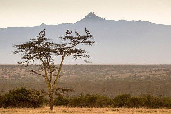 5-daagse wandelavontuur Mt Kenya via ...