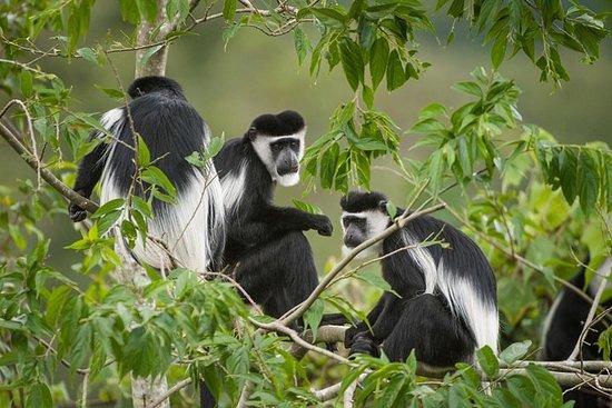 Safari privé de 10 jours en Ouganda...
