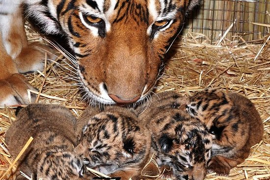 Visit zoo and Ciudad Luján