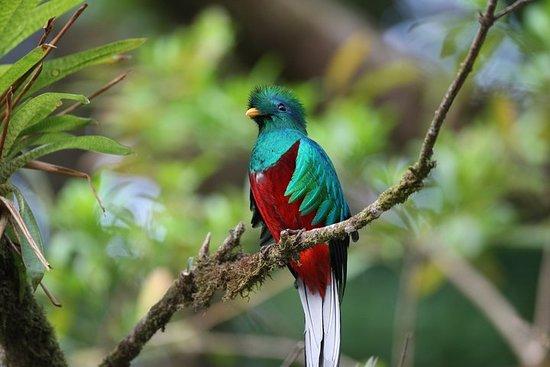 Natürlich Costa Rica - Naturwunsch Costa Rica 5 Tage / 4 Nächte