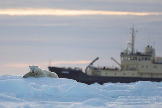 เฮลล์, นอร์เวย์: Join our expedition ships and travel with us into the Svalbard wilderness. Watch the wildlife and experience the Arctic silence.