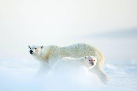 Arctic Wildlife Tours