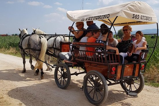 In Carrozza in the places where St. Francis preached to the birds