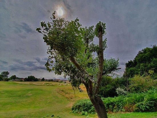 Landseer Park