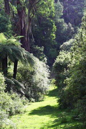 Allambee, Αυστραλία: The walk back on the Moonlight Track
