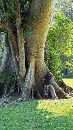 Un bel arbre du site