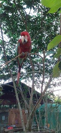 Amazonian Animal Haven