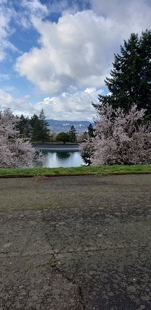 Willamette Valley, OR: The Hawk's View view from this winery. See Mt. Hood?