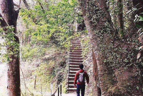 Tatoveringer OK !! Tokyo Hiking & Onsen varme kilder