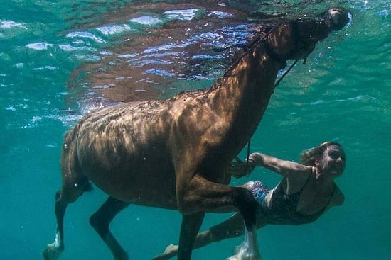 Half-Day Tour & Horseback Ride and Swim...