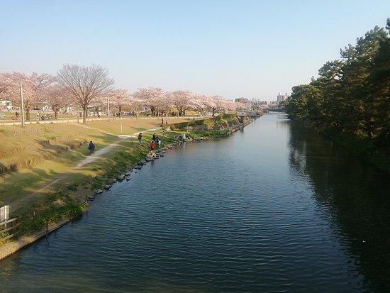 ②桜が満開(Sakura ga mankai)♪ Las flores de cerezo están en plena floración ♪ The cherry trees are in full blossom ♪