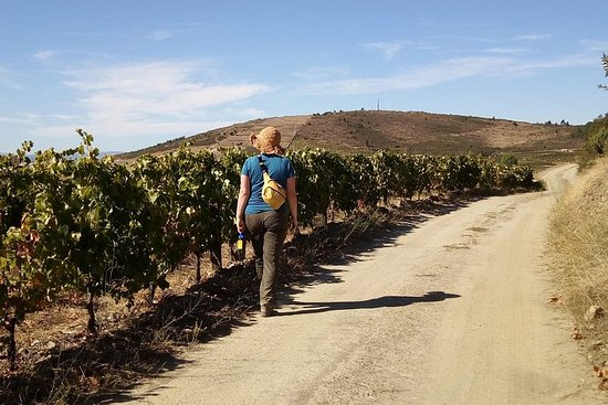 Hiking Tour at Douro Valley, with...
