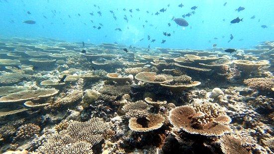 Those corals, Rasdhoo 2020