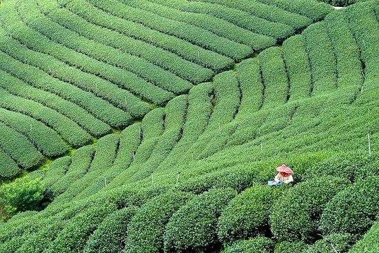 10-Day Round Taiwan Tea Origin Tour