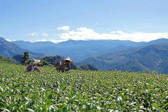 5-tägige Premium Sun Moon Lake und Alishan Private Tour ab Taipeh
