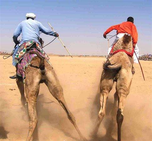المملكة العربية السعودية: Corsa di cammelli 162