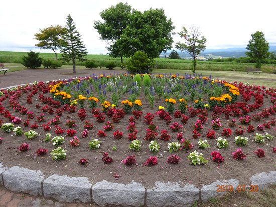 Kamifurano-cho, اليابان: 花と憩いの広場