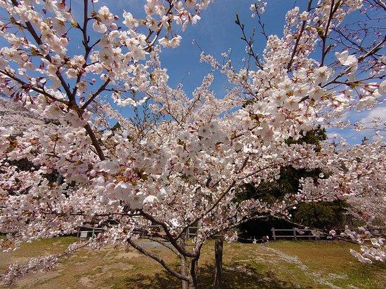 Takiyama Park