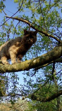 จังหวัดเวนิส, อิตาลี: Ecco la mia felix domestica...passeggiata sull'albero 🐱 Buona Pasqua a tutti🌼🌼🐇🐣🐤🌸🌸