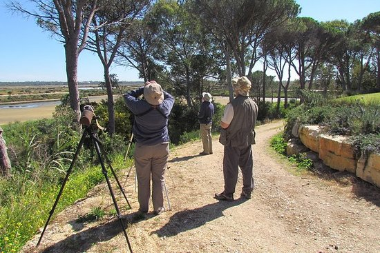 Journée d'observation d'oiseaux dans...
