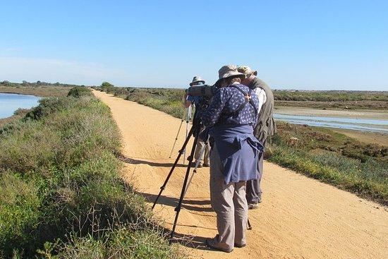Observation des oiseaux dans le Parc...